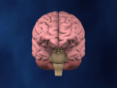 Anterior view of Brain