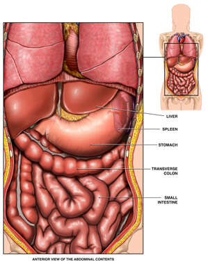 Normal Anatomy of the Abdomen