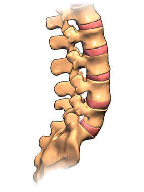 The Lumbar Spine: Lateral View