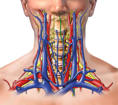 Vasculature and Nerves of the Neck