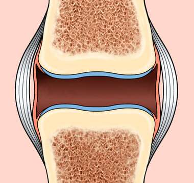 Synovial Joint, Normal