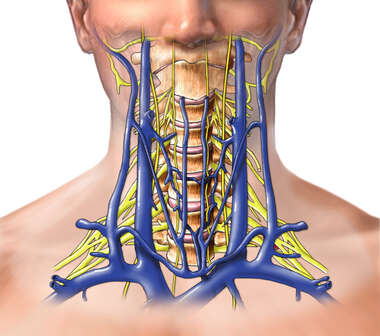 Veins of Head and Neck