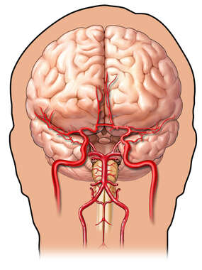 Cerebral Arteries - Anterior (Front) View