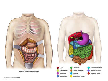 Segments of the Intestine and the Relationship to the Abdominal Incision