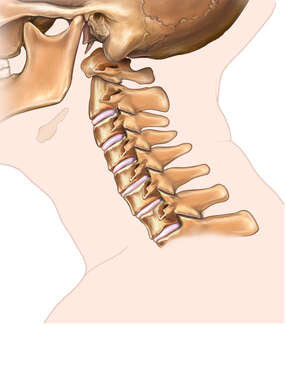 Lateral View of the Cervical Spine