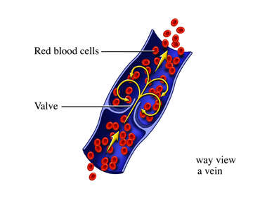 Venous Blood Flow