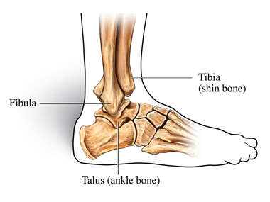Lateral (Side) View of Ankle Joint